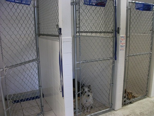 Some of the dog boarding kennels
